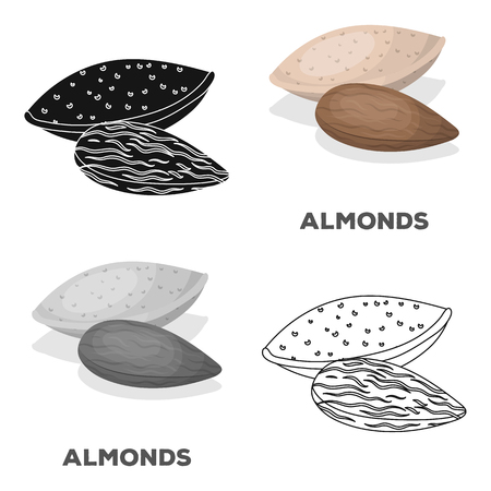 Almonds.Different kinds of nuts single icon in cartoon style vector symbol stock illustration.