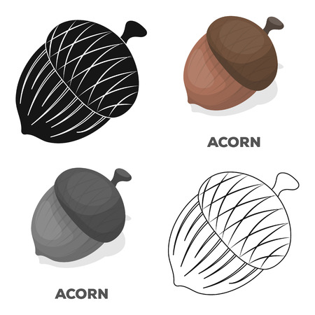 An acorn with a hat.Different kinds of nuts single icon in cartoon style vector symbol stock illustration.