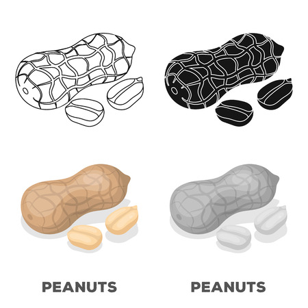 Peanut in the shell.Different kinds of nuts single icon in cartoon style vector symbol stock illustration.
