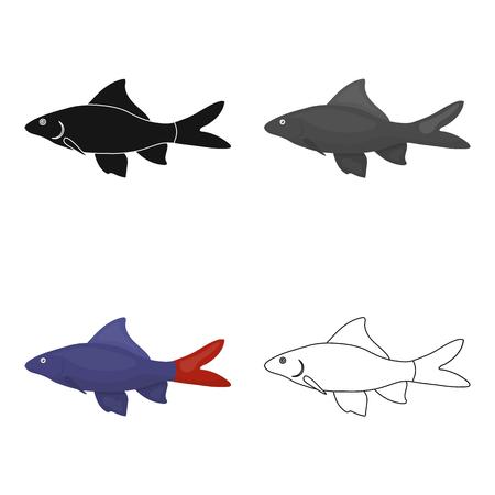 Red Tail Shark fish icon cartoon. Singe aquarium fish icon from the sea,ocean life cartoon.