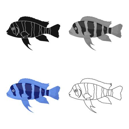 Frontosa Cichlid (Cyphotilapia Frontosa) fish icon cartoon. Singe aquarium fish icon from the sea,ocean life cartoon. Illustration
