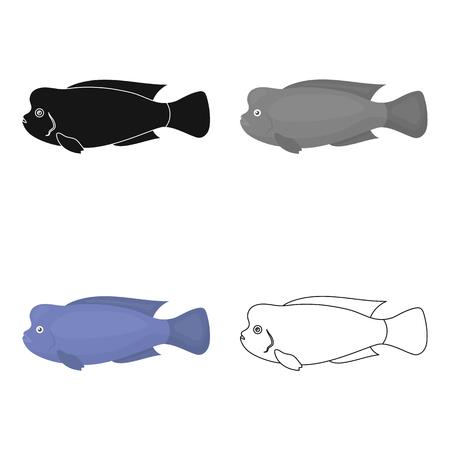 headed: Stearocranus fish icon cartoon. Singe aquarium fish icon from the sea,ocean life cartoon. Illustration