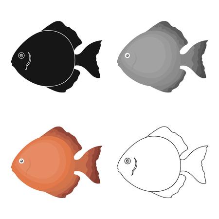 discus: Discus fish icon cartoon. Singe aquarium fish icon from the sea,ocean life cartoon. Illustration