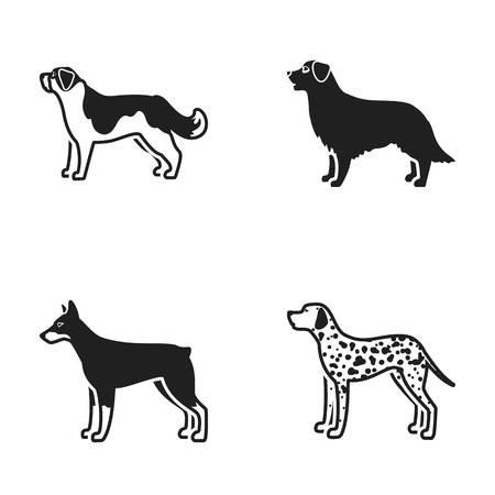 St. Bernard, retriever,doberman, labrador. Dog breeds set collection icons in black style vector symbol stock illustration web.