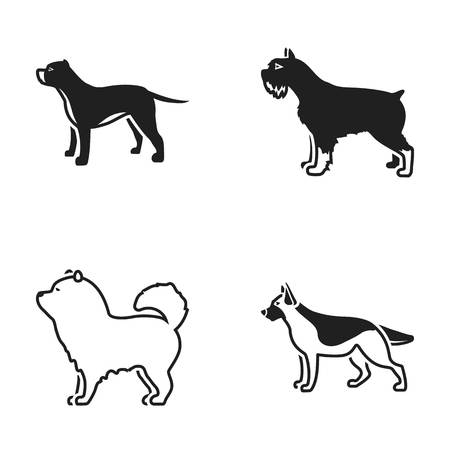chow: Pit bull, german shepherd, chow chow, schnauzer. Dog breeds set collection icons in black style vector symbol stock illustration web.
