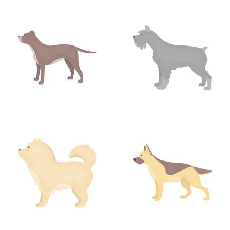 pit: Pit bull, german shepherd, chow chow, schnauzer. Dog breeds set collection icons in cartoon style vector symbol stock illustration .