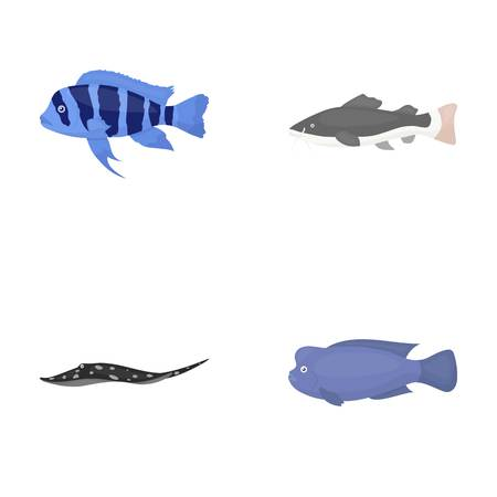 Frontosa, cichlid, phractocephalus hemioliopterus.Fish set collection icons in cartoon style vector symbol stock illustration . Illustration