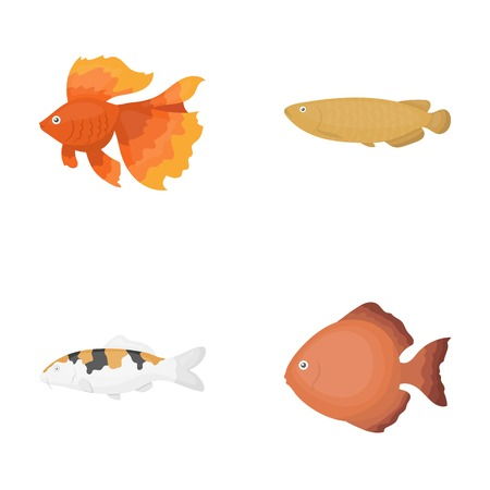 Discus, gold, carp, koi, scleropages, fotmosus.Fish set collection icons in cartoon style vector symbol stock illustration web. Illustration