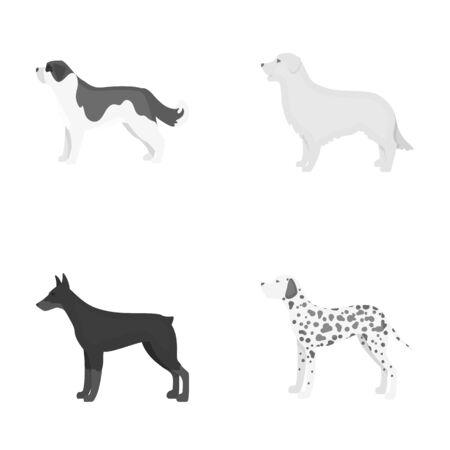 St. Bernard, retriever,doberman, labrador. Dog breeds set collection icons in monochrome style vector symbol stock illustration web. Illustration