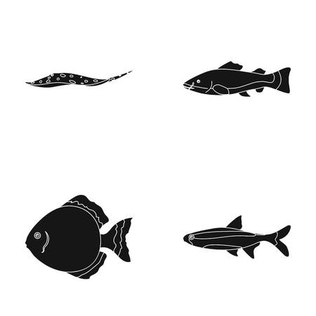 Angelfish, common, barbus, neon.Fish set collection icons in black style vector symbol stock illustration web. Illustration