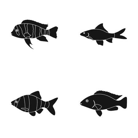 Botia, clown, piranha, cichlid, hummingbird, guppy,Fish set collection icons in black style vector symbol stock illustration web. Illustration