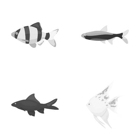 barbus: Angelfish, common, barbus, neon.Fish set collection icons in monochrome style vector symbol stock illustration web.