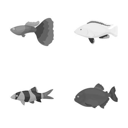 Botia, clown, piranha, cichlid, hummingbird, guppy,Fish set collection icons in monochrome style vector symbol stock illustration web.