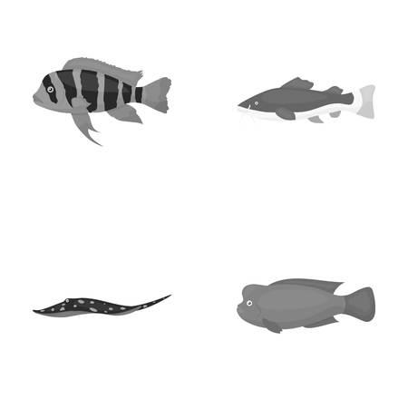 frontosa: Frontosa, cichlid, phractocephalus hemioliopterus.Fish set collection icons in monochrome style vector symbol stock illustration web.