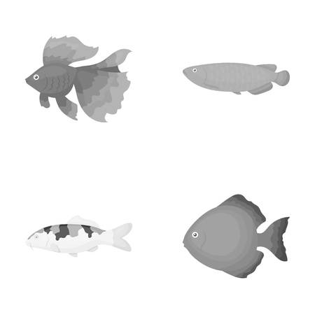 Discus, gold, carp, koi, scleropages, fotmosus.Fish set collection icons in monochrome style vector symbol stock illustration web.