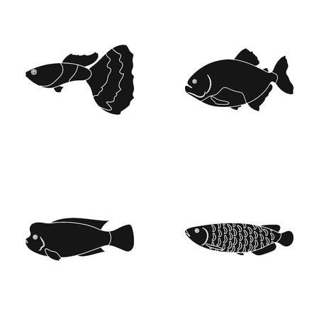 Frontosa, cichlid, phractocephalus hemioliopterus Illustration