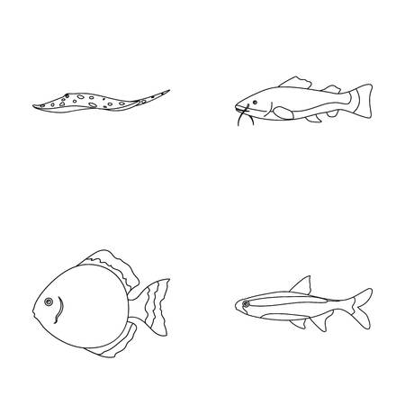 barbus: Angelfish, common, barbus, neon.Fish set collection icons in outline style vector symbol stock illustration web. Illustration