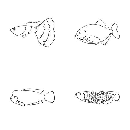 Frontosa, cichlid, phractocephalus hemioliopterus.Fish set collection icons in outline style vector symbol stock illustration web.