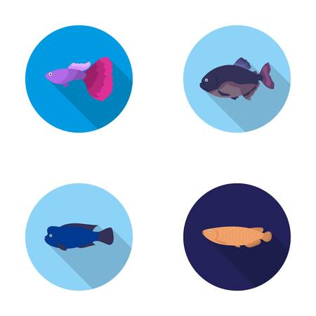 Frontosa, cichlid, phractocephalus hemioliopterus.Fish set collection icons in flat style vector symbol stock illustration web.