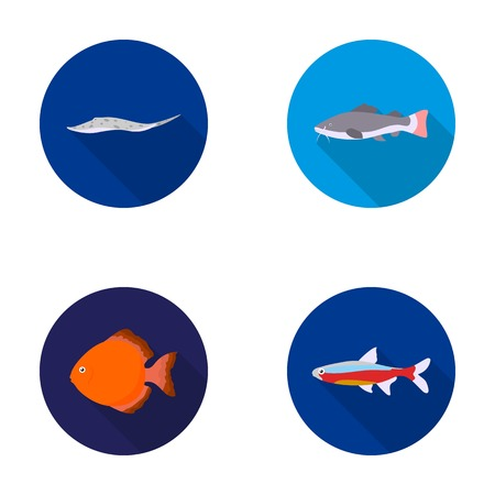 barbus: Angelfish, common, barbus, neon.Fish set collection icons in flat style vector symbol stock illustration web. Illustration