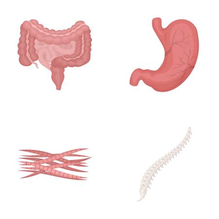 Intestines, stomach, muscles, spine. Organs set collection icons in cartoon style vector symbol stock illustration .