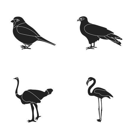 Sparrow and other species. Birds set collection icons in black style vector symbol stock illustration web.