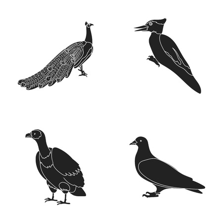 Peacock, woodpecker and various species. Birds set collection icons in black style vector symbol stock illustration web.