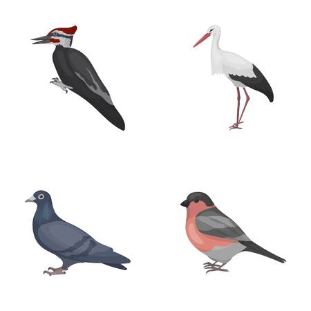 Woodpecker, stork and others. Birds set collection icons in cartoon style vector symbol stock illustration web.