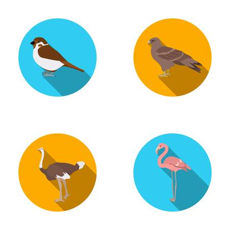 avestruz: Sparrow and other species. Birds set collection icons in flat style vector symbol stock illustration web. Vectores