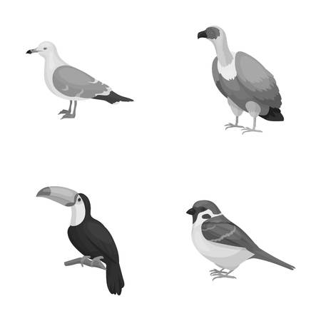 Gull, toucan and other species. Birds set collection icons in monochrome style vector symbol stock illustration web.
