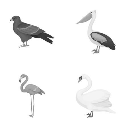 Kite, pelican, flamingo, swan. Birds set collection icons in monochrome style vector symbol stock illustration web.