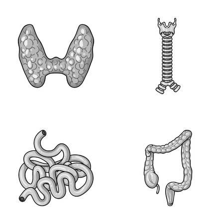 small intestine: Thyroid gland, spine, small intestine, large intestine. Human organs set collection icons in monochrome style vector symbol stock illustration web. Illustration
