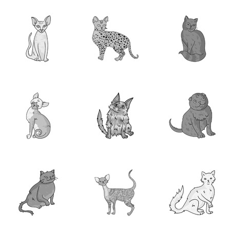 curly tail: Collection of cats in one picture. Different cats in one picture. Cat breeds icon in set collection on monochrome style vector symbol stock illustration.