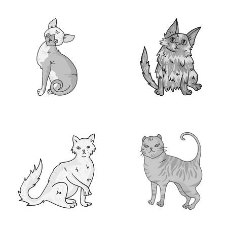 Turkse angora, Britse langharig en andere soorten. Kattenrassen instellen collectie iconen in zwart-wit stijl vector symbool stock illustratie web. Stock Illustratie