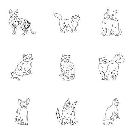 curly tail: Collection of cats in one picture. Different cats in one picture. Cat breeds icon in set collection on outline style vector symbol stock illustration. Illustration