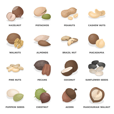 pumpkin seeds: Hazelnuts, peanuts, cashews, pistachios, and other varieties of nuts. Different kinds of nuts set collection icons in cartoon style vector symbol stock illustration web.