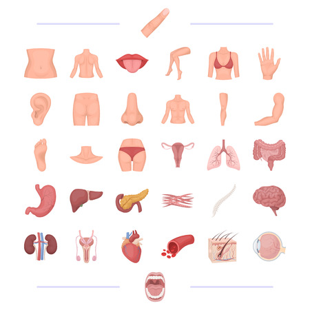 A body, physiology, medicine and other web icon in cartoon style.tonsils, human, happiness, icons in set collection. Ilustracja