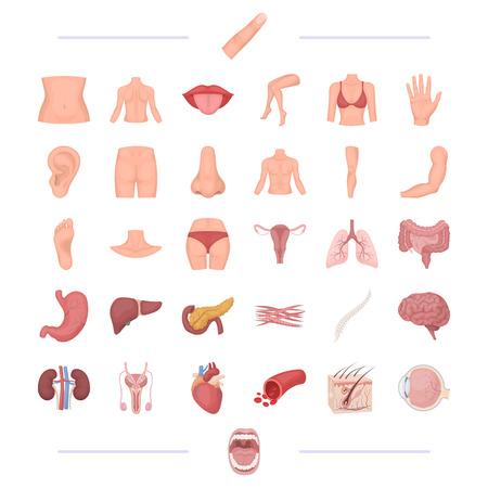 Un cuerpo, la fisiología, la medicina y otro icono de la web en la historieta style.tonsils, humano, felicidad, iconos en la colección de conjunto. Foto de archivo - 81435498