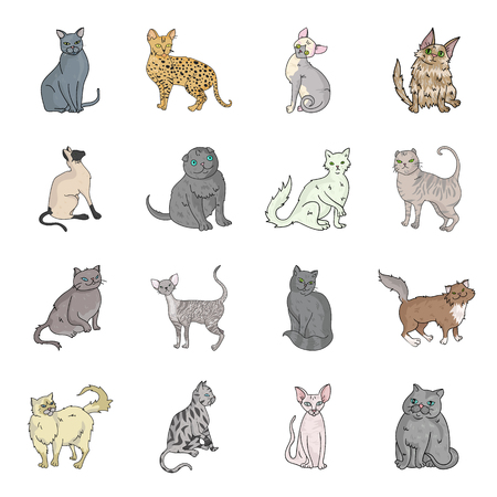 Cat breeds set icons in cartoon style. Big collection of cat breeds vector symbol stock illustration Illustration