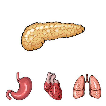 Set of human organs icon.