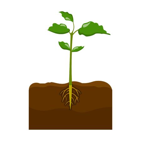 Plant icoon.