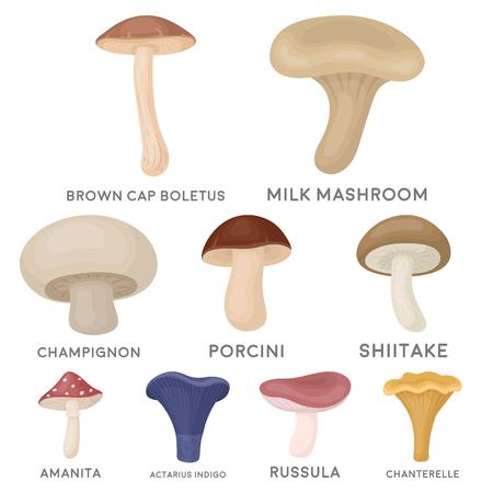 Big collection of mushroom vector symbol stock illustration
