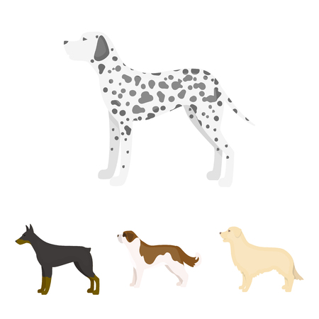 St. Bernard, retriever,doberman, labrador. Dog breeds set collection icons in cartoon style vector symbol stock illustration web. Illustration
