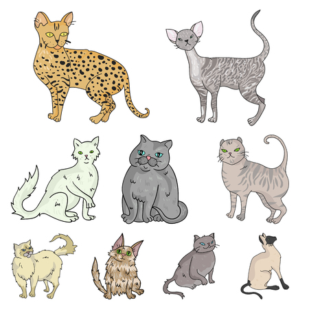 curly tail: Collection of cats in one picture. Different cats in one picture. Cat breeds icon in set collection on cartoon style vector symbol stock illustration. Illustration