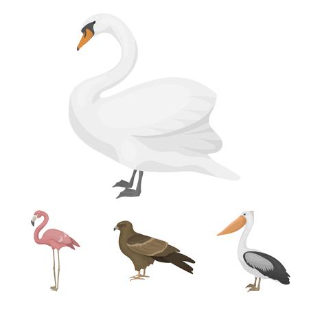 カイト、ペリカン、フラミンゴ、白鳥。鳥は、漫画スタイルのベクトル シンボル ストック イラストでコレクションのアイコンを設定します。