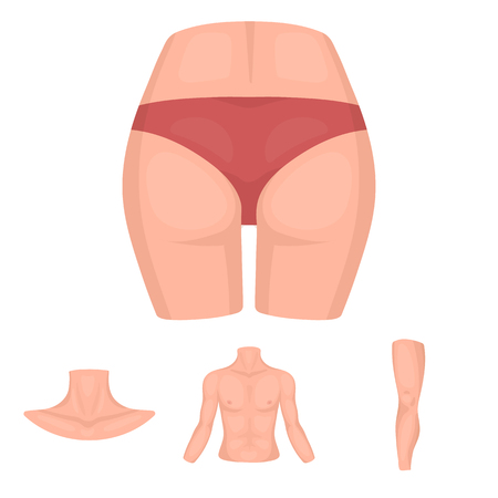 Torso, leg, neck and buttocks. Body parts set collection icons in cartoon style vector symbol stock illustration .
