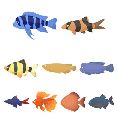 barbus: Aquarium fish set icons in cartoon style. Big collection of aquarium fish vector symbol stock Illustration