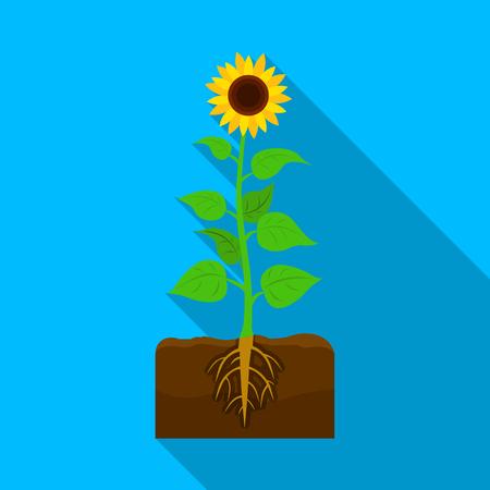peasant: Sunflower, single icon in flat style.Sunflower vector symbol stock illustration .