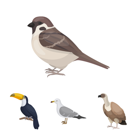 Gull, toucan and other species. Birds set collection icons in cartoon style vector symbol stock illustration web.