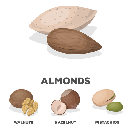 Hazelnut, pistachios, walnut, almonds.Different kinds of nuts set collection icons in cartoon style vector symbol stock illustration web. Illustration